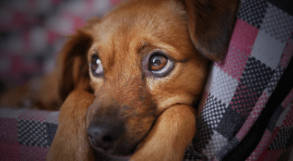Common Signs of Separation Anxiety in Dogs